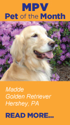 Read more about Madde